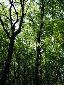森林浴.jpg